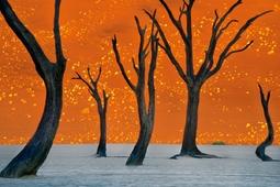 Kraina duchów - zdjęcie Fransa Lantinga