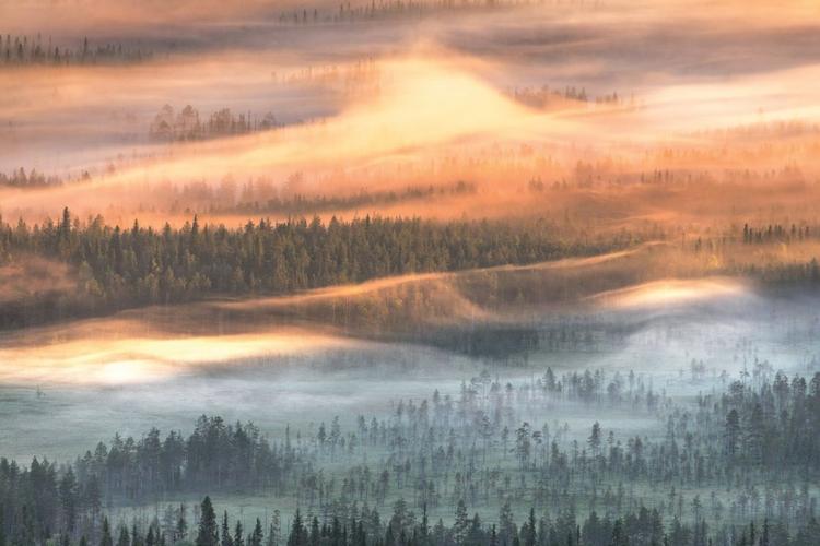 Sfotografuj mglisty poranek