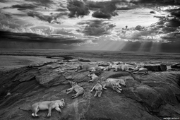 Wyniki konkursu Wildlife Photographer of the Year 2014