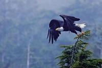 Zacznij swoją przygodę z fotografowaniem ptaków