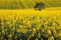Fotografia przyrodnicza. Uchwyćcie zmieniające się pory roku