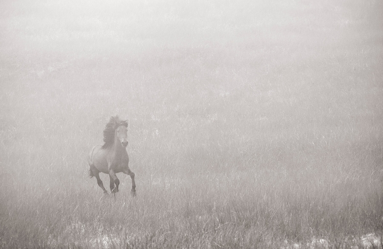 """Discovering the Horses of Sable Island"", fot. Drew Doggett"