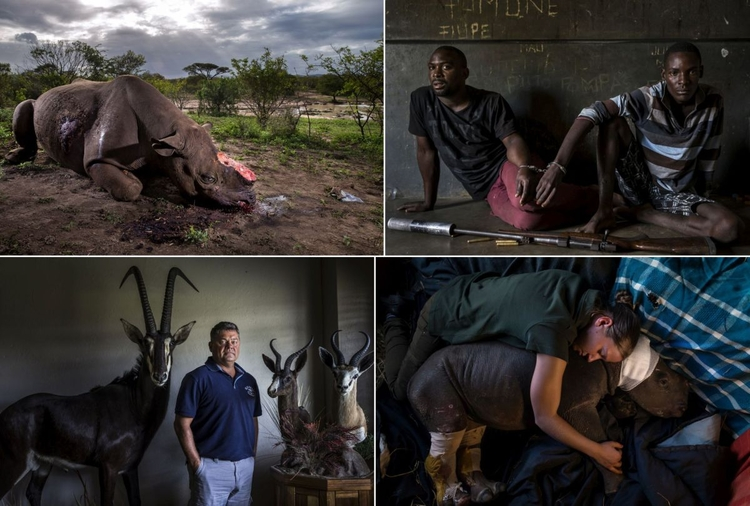 Nature - pierwsza nagroda, reportaż