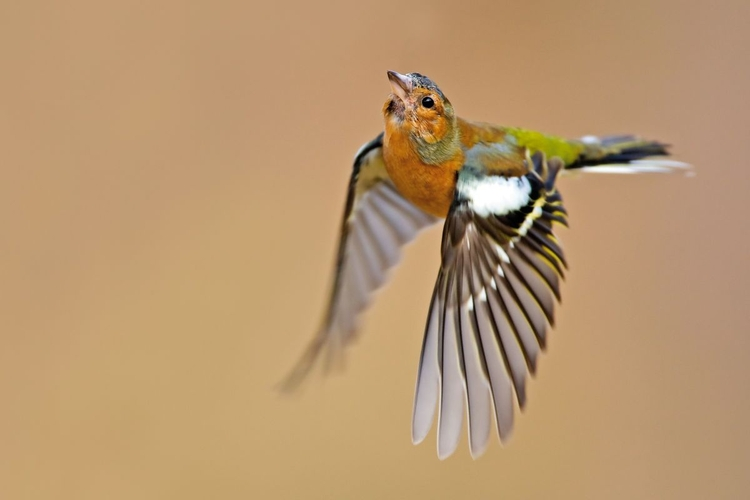 Fotografujcie ptaki w locie