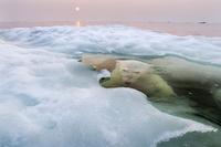 Edycja 2013 konkursu National Geographic rozstrzygnięta