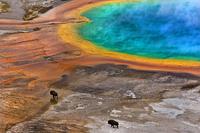 Najlepsze zdjęcia przyrodnicze według Society of Biology