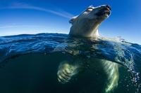 Proszę Państwa, oto miś! Zdjęcie roku National Geographic