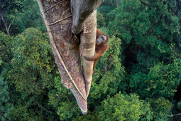 Znamy wyniki konkursu Wildlife Photographer of the Year 2016