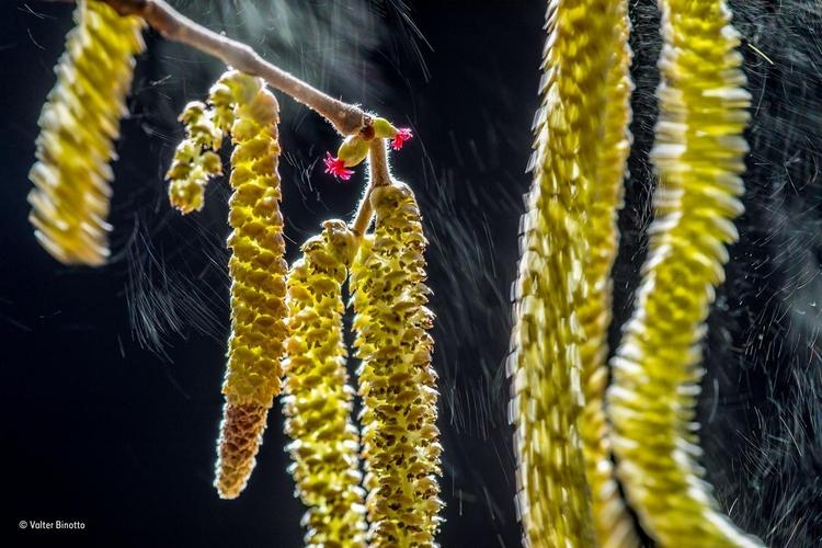 """Zwycięskie zdjęcie z kategorii """"Rośliny i grzyby"""" - """"Wind composition"""". Fot. Valter Binotto / Wildlife Photographer of the Year"""