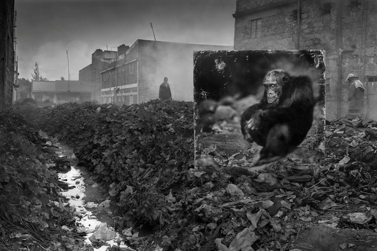 Wydeptana ścieżka i szympans, 2014, fot. Nick Brandt