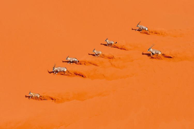 zdjęcie gazeli fotograf dzikiej przyrody Marsel van Oosten
