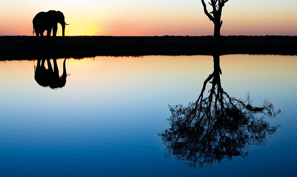 Marsel Van Oosten Zawód Fotograf Dzikiej Przyrody