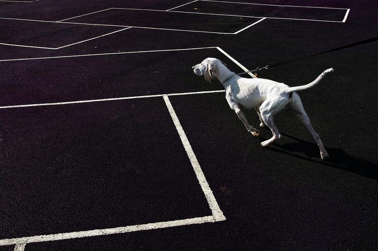 """Gonitwa białego psa, Londyn, 2004, fot. Nils Jorgensen""""Bardzo spodobało mi się to zestawienie, choć nie byłem pewien, czy uda mi się wydobyć szczegóły z czarno-białego podłoża. Miałem zaledwie kilka sekund do namysłu, ale na szczęście wszystko się udało""""."""