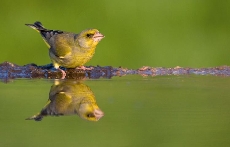 Jak zbudować zbiornik wodny, by fotografować kąpiące się ptaki