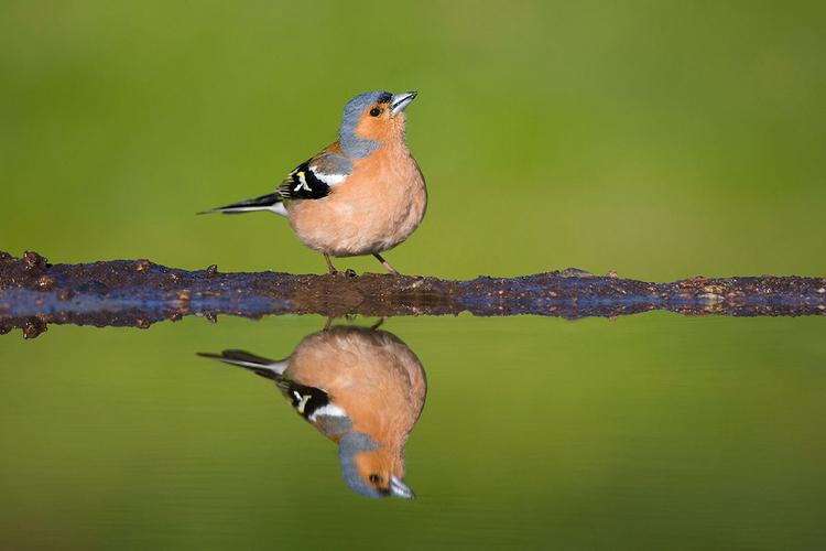 Spożytkuj naturalne światło Poranne światło jest doskonałe, ale w pochmurne dni można fotografować przez cały dzień, korzystając z równomiernego oświetlenia. Inną możliwością jest fotografowanie późnym popołudniem i zastosowanie promieni słońca padających od tyłu do podkreślenia rozchlapywanej przez ptaki wody.