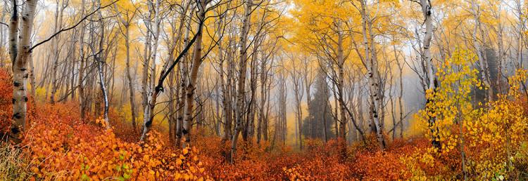 Zdjęcie wykonane w Deer Valley, w stanie Utah, fot. Peter Lik.