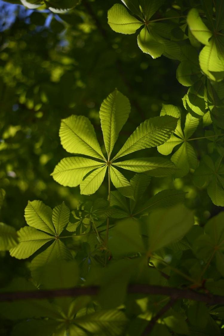 Wyświetl zdjęcie JPEG w pełnej rozdzielczości     Aparat fotograficzny: Nikon D5 + Nikkor AF-S 50 mm f/1,8G  Ustawienia: ISO 400, f/1,8, 1/6400 s, 50 mm