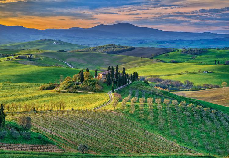 """Bella Vista""""Fotografia zarejestrowana w Pienza, regionie Toskanii słynącym z produkcji wina. Poranne światło dało rozbiegające się cienie, które miękko kładły się pomiędzy rzędami drzew oliwnych i winorośli"""""""