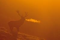 Idziemy na rykowisko - fotografia dzikich zwierząt o świcie