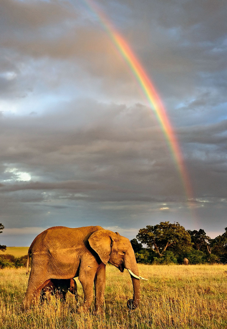 Kenia, 2012 Słoń afrykański sfotografowany na tle tęczy w rezerwacie Masai Mara, fot. Andy Rouse
