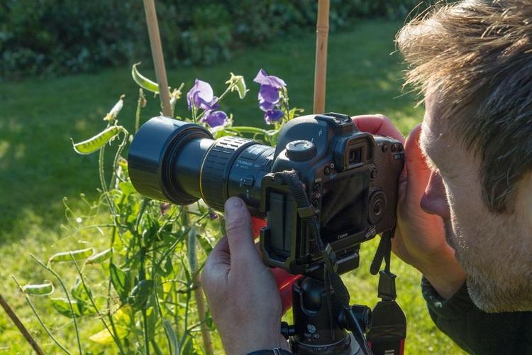 """Zdecyduj, co sfotografować Wybierz temat, który aż prosi się, by go podświetlić. Może to być kwiat lub inna cześć rośliny z półprzezroczystymi płatkami albo liśćmi, bądź zwierzę mające futro. Obejrzyj kandydatów na """"modeli"""" pod światło, by sprawdzić, czy będą dobrze wyglądali otoczeni świetlną obwódką."""