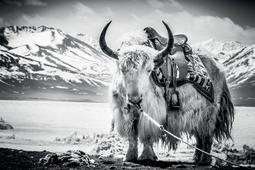 Shirren Lim - odkrywanie świata poprzez fotografię