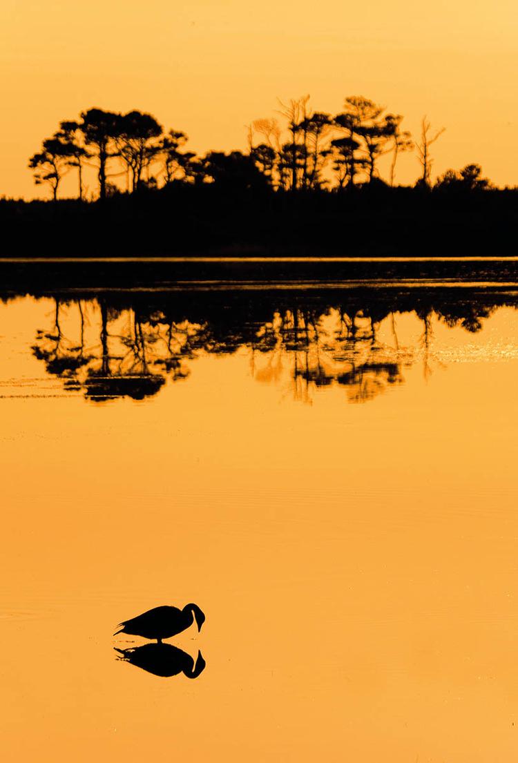 Zdjęcia zwierząt róbcie o wschodzie słońca