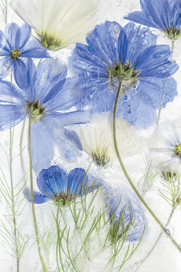 fot. Mandy Disher