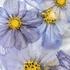 Jak wykonać zdjęcia zamrożonych kwiatów