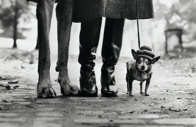 Felix, Gladys i Rover, 1974, fot. Elliott Erwitt