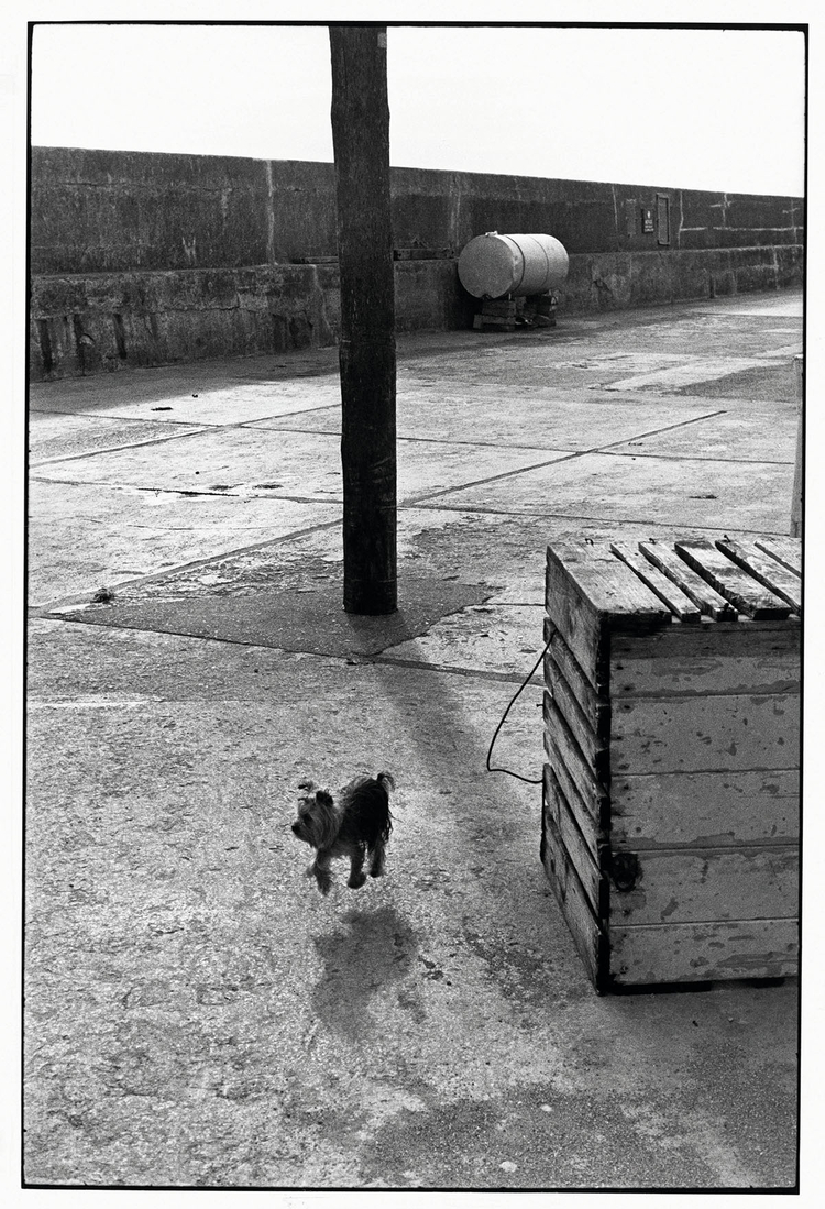 """Yorkshire Terrier, 1986, fot. Elliott ErwittZdjęcie wykonane w Ballycotton, w Irlandii. """"Psów nie trzeba przekupywać i nie przejmują się one swoim wyglądem, tak jak modelki"""" - tak skomentował to zdjęcie Erwitt w swojej książce zatytułowanej Woof"""