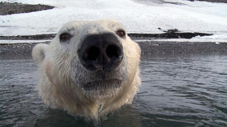 O tym, jak dziś BBC filmuje dzikie zwierzęta [wideo]