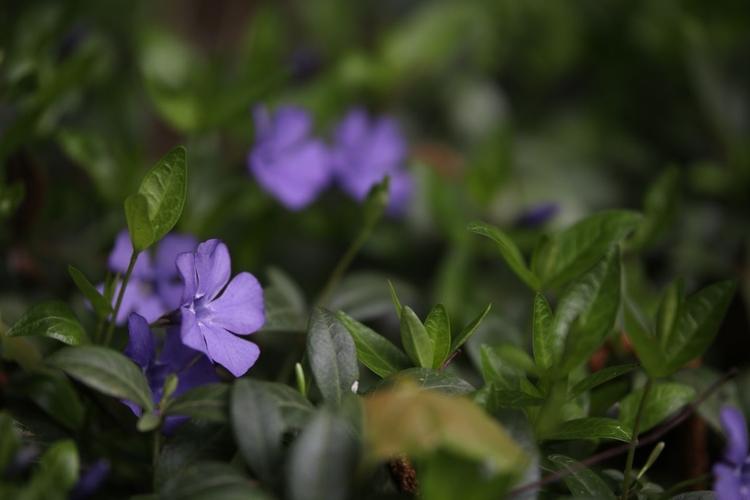 Wyświetl zdjęcie JPEG w pełnej rozdzielczości   Aparat: Canon EOS 80D + Sigma Art 50-100 mm f/1,8 Ustawienia: ISO 100, f/2, 1/1250 s, 100 mm