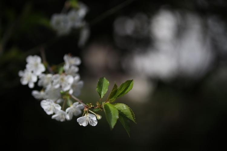 Wyświetl zdjęcie JPEG w pełnej rozdzielczości   Aparat: Canon EOS 80D + Sigma Art 50-100 mm f/1,8 Ustawienia: ISO 100, f/1,8, 1/4000 s, 50 mm