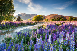 Wyniki International Garden Photographer of the Year 2016