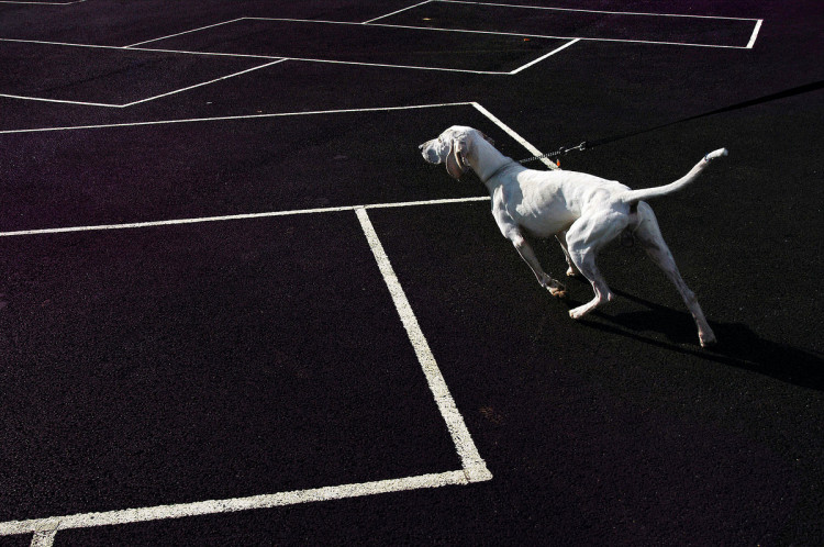 Gonitwa białego psa, Londyn, 2004, fot. Nils Jorgensen